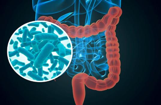 diabetesmicrobiotica.png